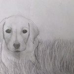 Annie's sketch of yellow lab